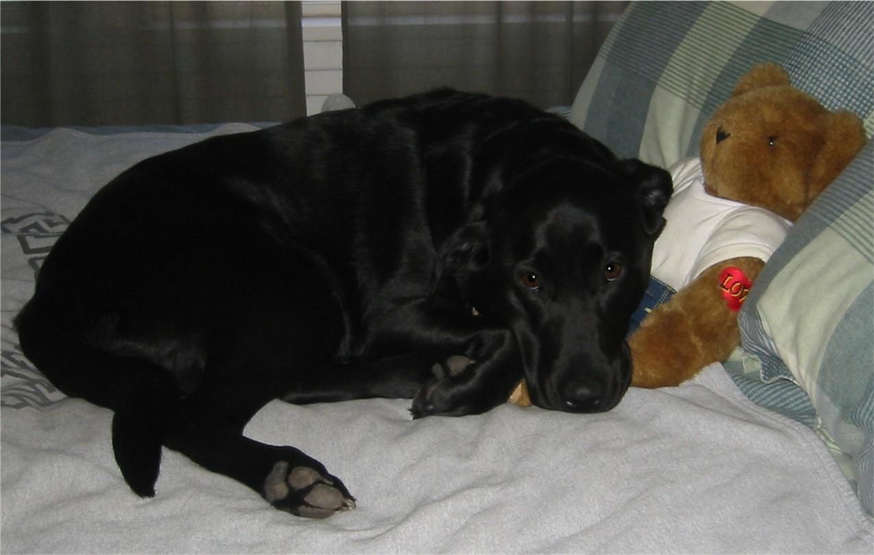 doggie dog world picture gallery cuddles pet services dog
