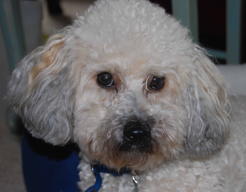 kitty corner picture gallery cuddles pet services dog